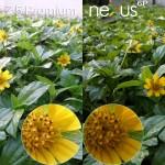 xperia z5 premium vs nexus 6p camera review comparison4