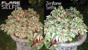 night low cherry flare selfie vs zenfone selfie camera comparison review2