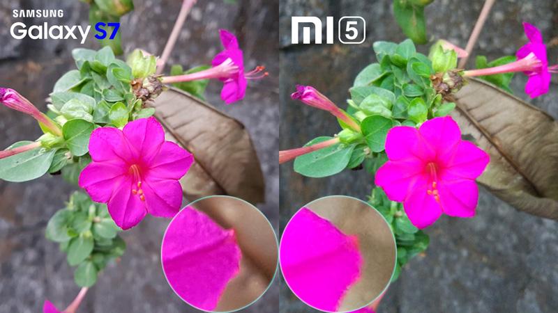 Mi5 Vs Galaxy S7 Camera Review 1