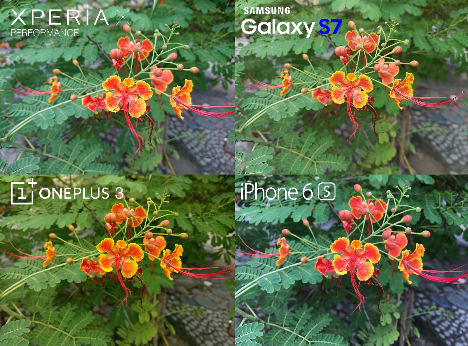 Camera Review Sony Xperia X Performance Samsung Galaxy S7 iPhone 6s 7 OnePlus 3 6 close up macro